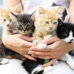 выбрать породу котенка